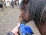 Fram med hästen
