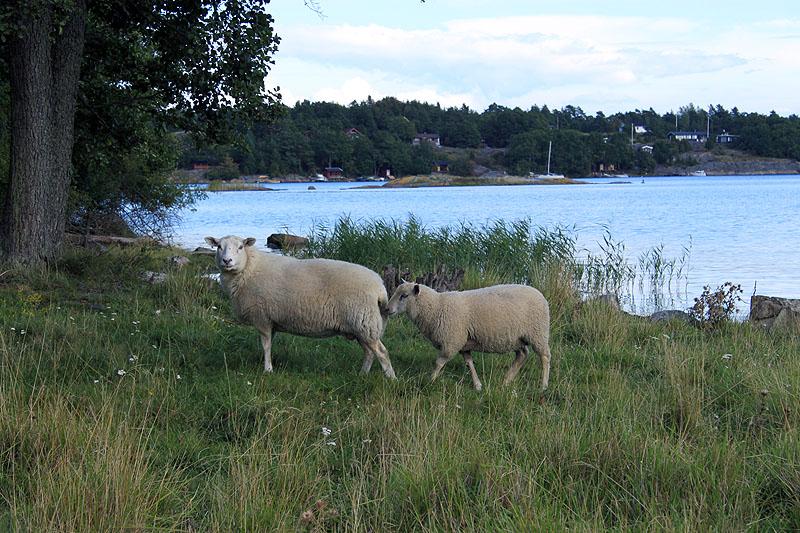 Får i Hålviken