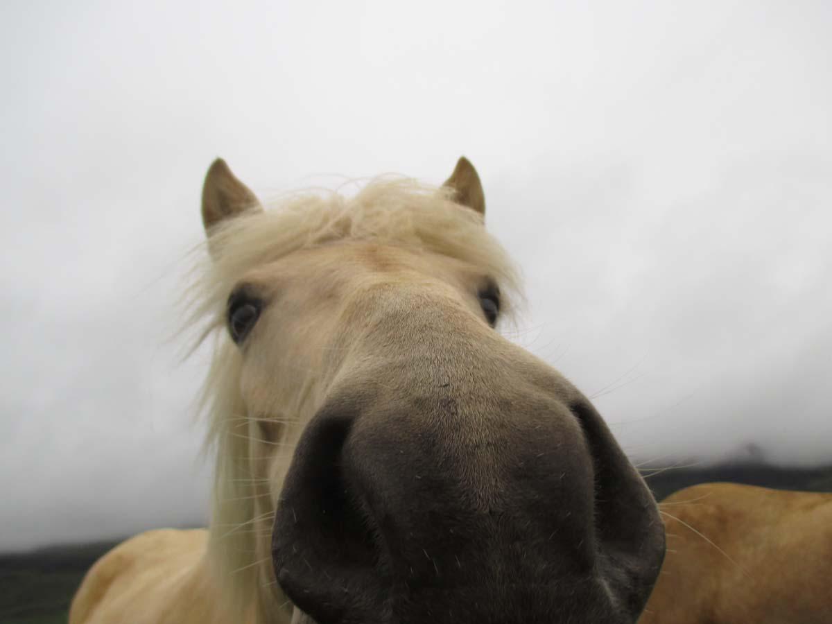Len mule