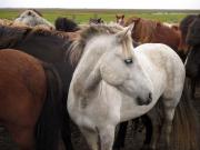Söt häst