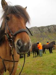 Hästen Leistur