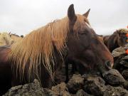 Blöt häst i regnet