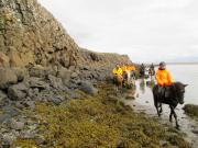 Havsbotten, sjögräs och klippbrant