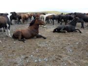 Skön och rulla sig i gruset om man är häst