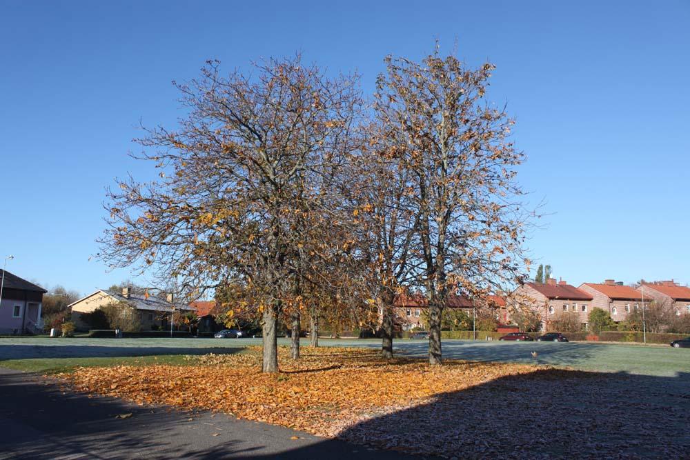 Höst på Lindgatan
