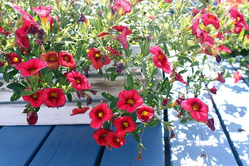 blommor2012_01