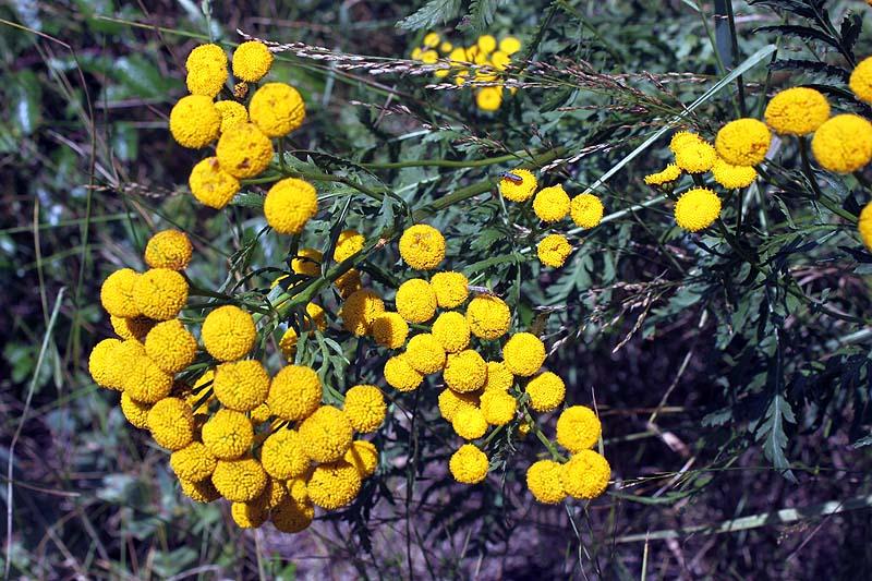 blommor2012_02