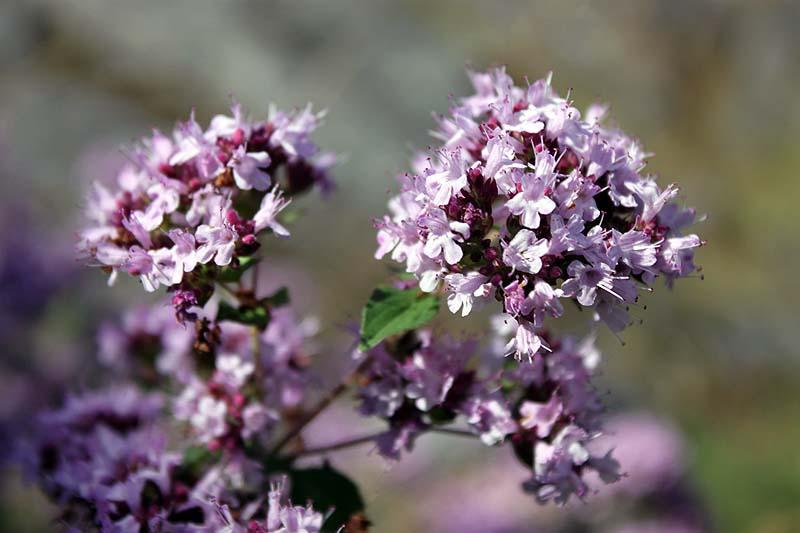 blommor2012_06