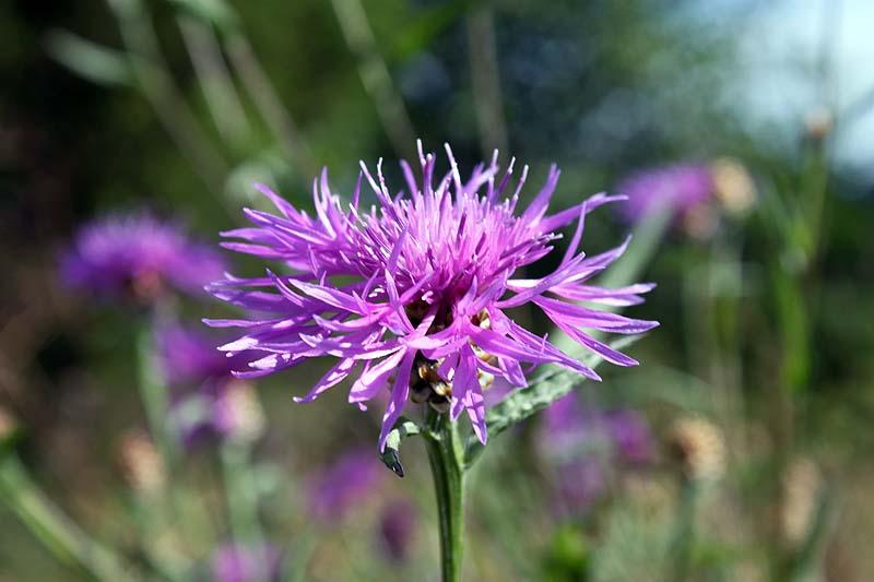 blommor2012_07