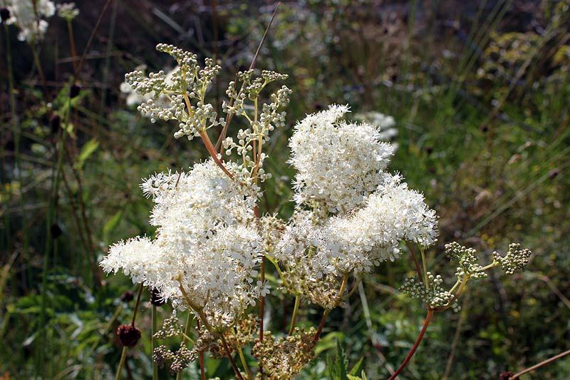 blommor2012_08