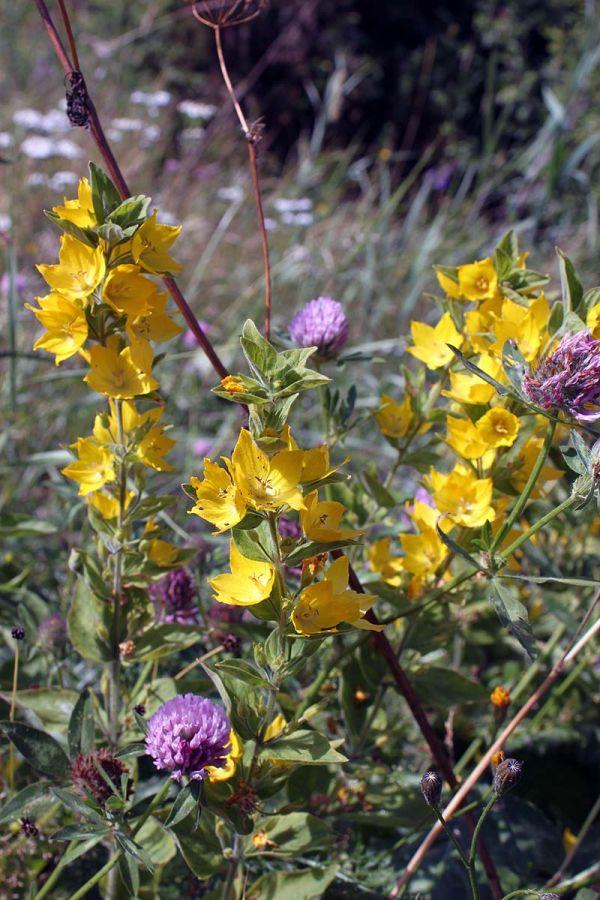 blommor2012_11