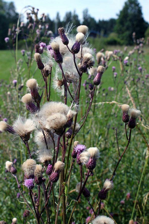 blommor2012_15