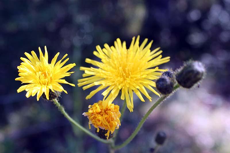 blommor2012_17