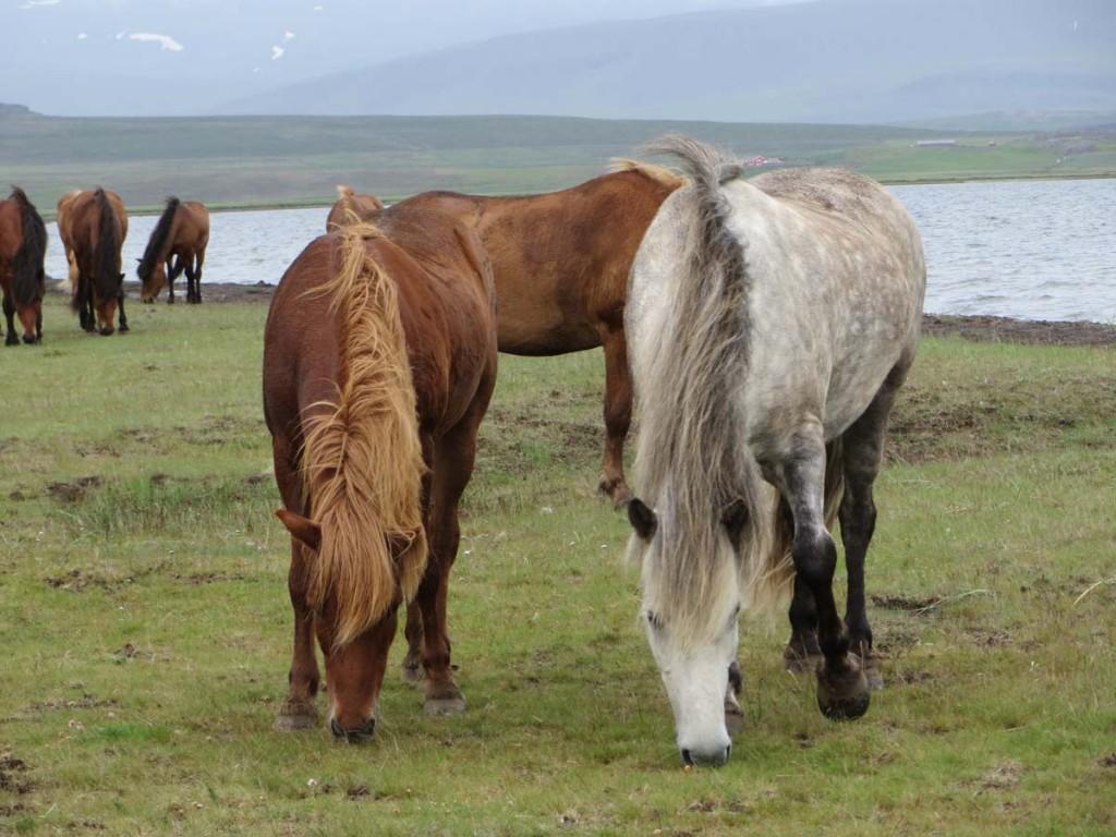 Island2013-TrailOfHope_16